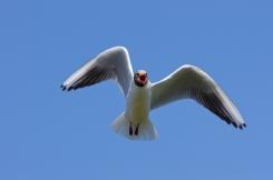 seagull attack 2